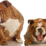 upset-and-happy-dogs-psychology